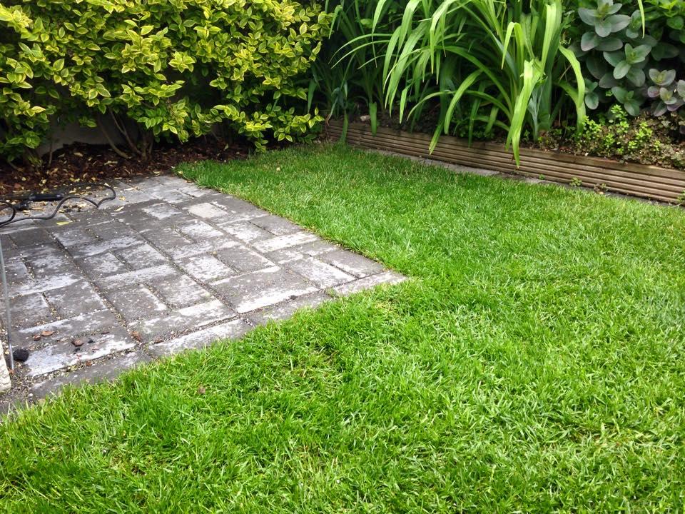 Pflasterung - Gras, feinster Kantenschnitt