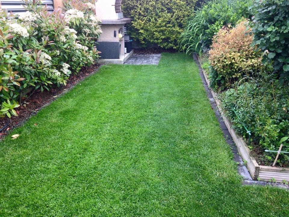 Rasenfläche klein